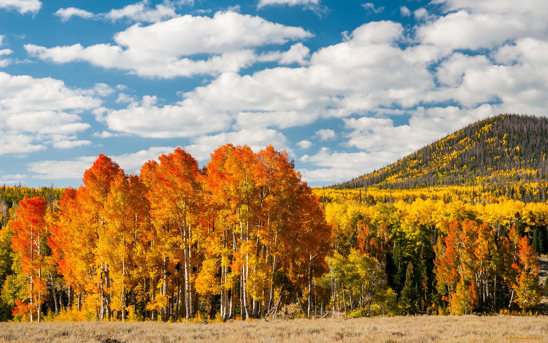 Красивые картинки леса осеннего тут никакие